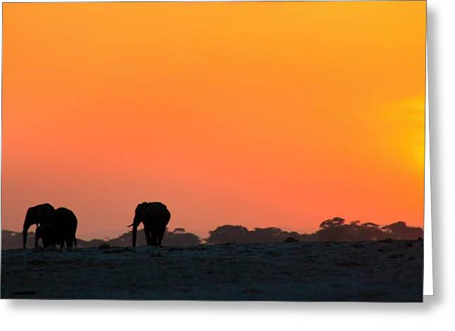 Greeting Card featuring the photograph African Elephant Sunset by Amanda Stadther