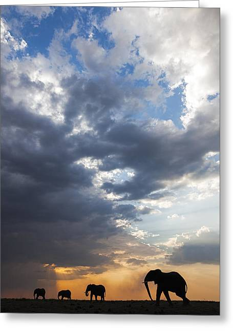 African Elephants At Sunset Botswana Greeting Card