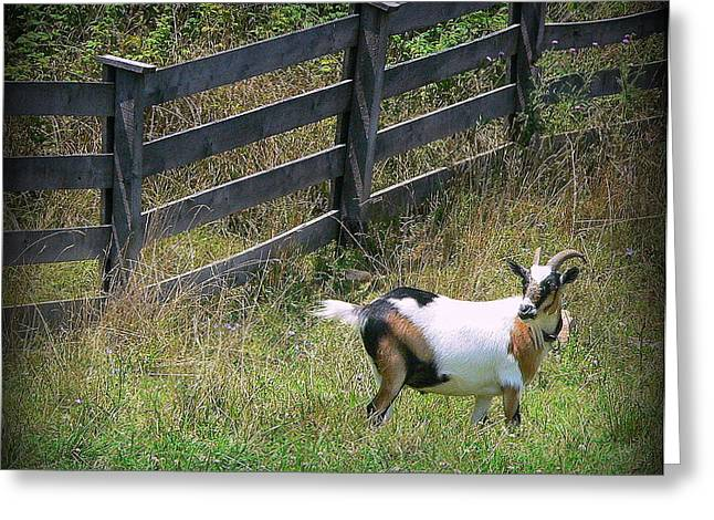 African Farm Goat-2 Greeting Card by Jo Anna Wycoff