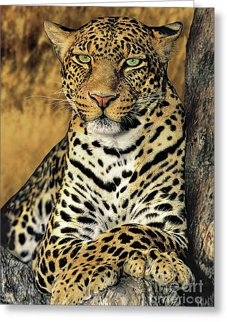 African Leopard Portrait Wildlife Rescue Greeting Card