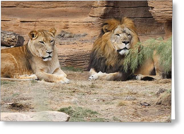 African Lion Couple 2 Greeting Card by Cathy Lindsey