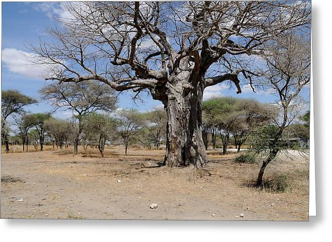 African Series 3000 Year Old Tree Greeting Card by Katherine Green