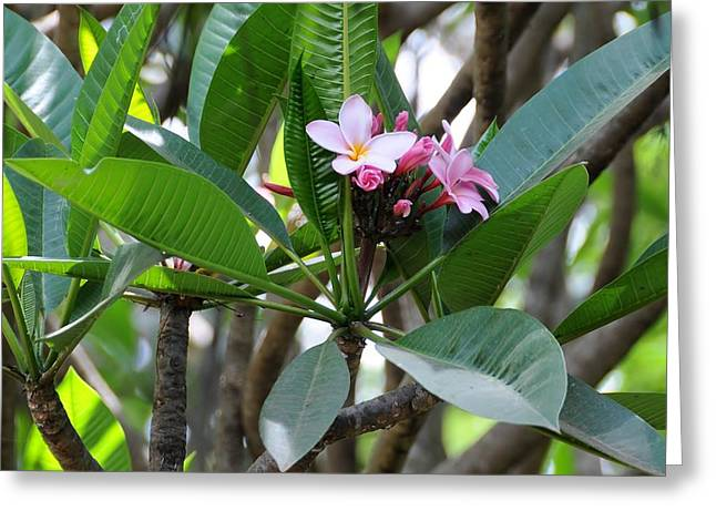 African Series Flower In Tree Greeting Card by Katherine Green