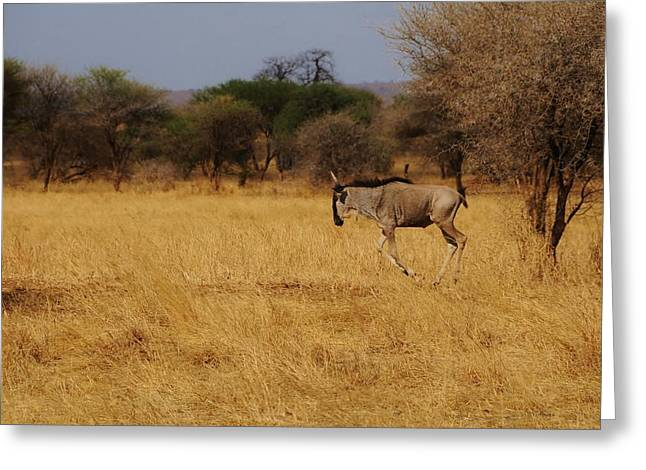African Series Grass Greeting Card by Katherine Green