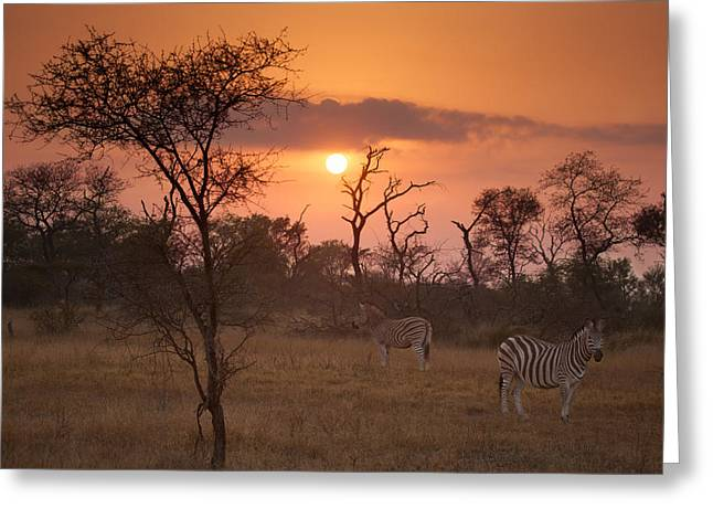 African Sunrise Greeting Card by Craig Brown