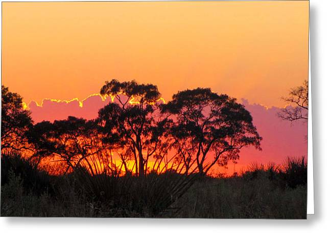African Sunrise Greeting Card by Karen E Phillips
