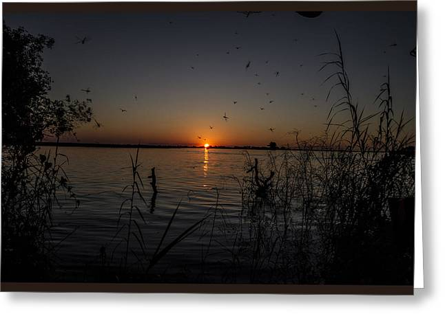 African Sunset Greeting Card