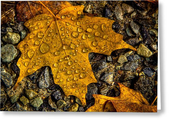 After An Autumn Rain Greeting Card by David Patterson