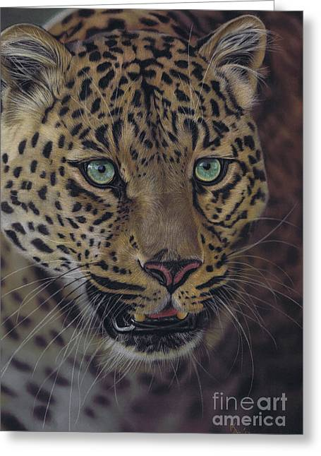 After Dark All Cats Are Leopards Greeting Card