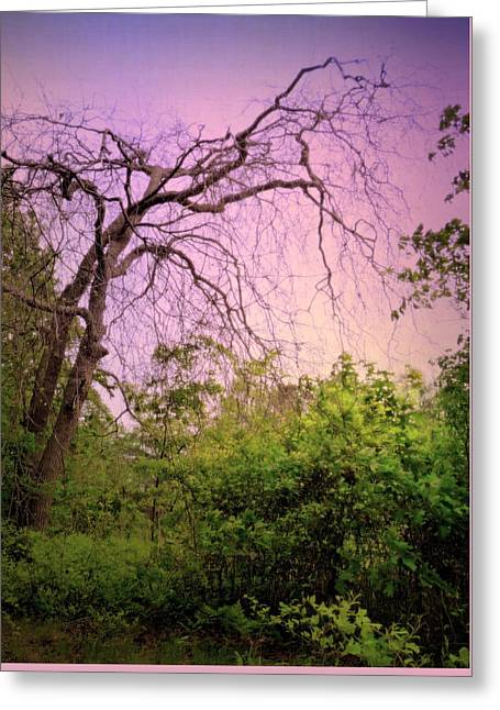 Greeting Card featuring the photograph After The Rain by Jim Whalen