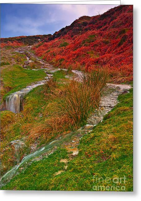 After The Rain - Moorland Streams Greeting Card