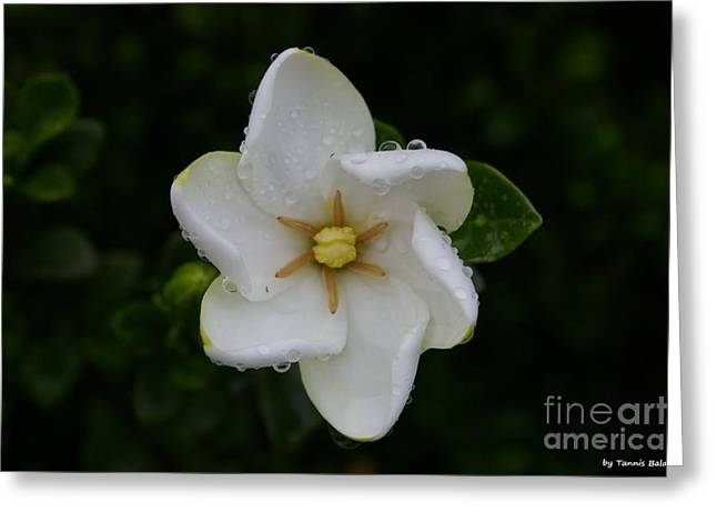 Greeting Card featuring the photograph After The Rain by Tannis  Baldwin