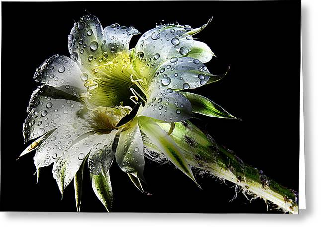 After The Rain Greeting Card by Van Allen Photography