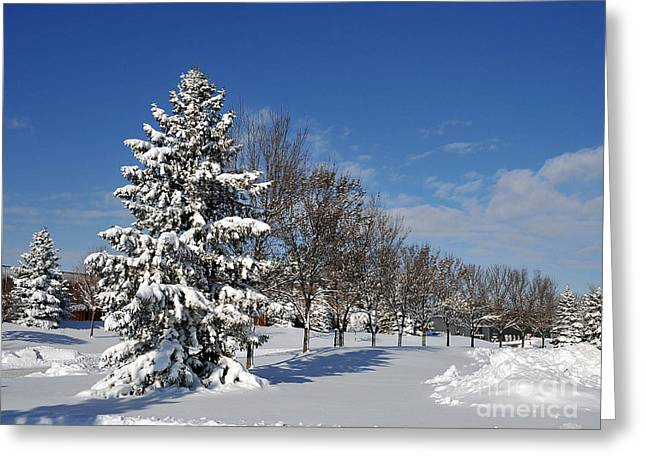 After The Snow 2 Greeting Card by Graham Taylor