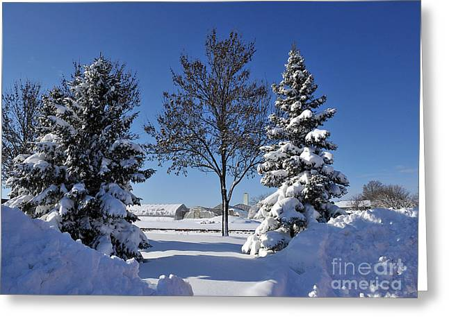 After The Snow Greeting Card by Graham Taylor