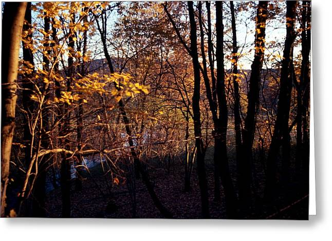 Afternoon Foliage Greeting Card by Brian Lucia