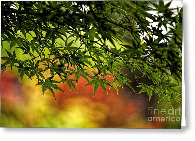 Afternoon Glow Greeting Card by Peggy Hughes