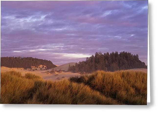 Afternoon Light Warms The Umpqua Dunes Greeting Card
