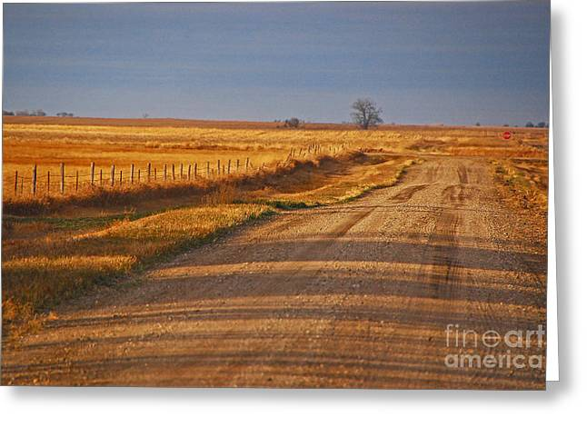 Afternoon Shadows Greeting Card by Mary Carol Story