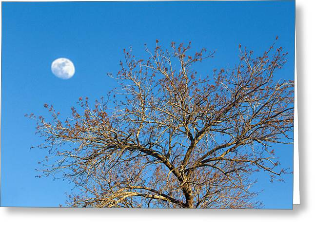 Afternoon Trees With Moon Greeting Card