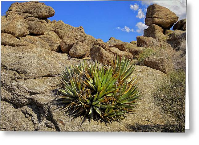 Greeting Card featuring the photograph Against The Odds by Michael Pickett