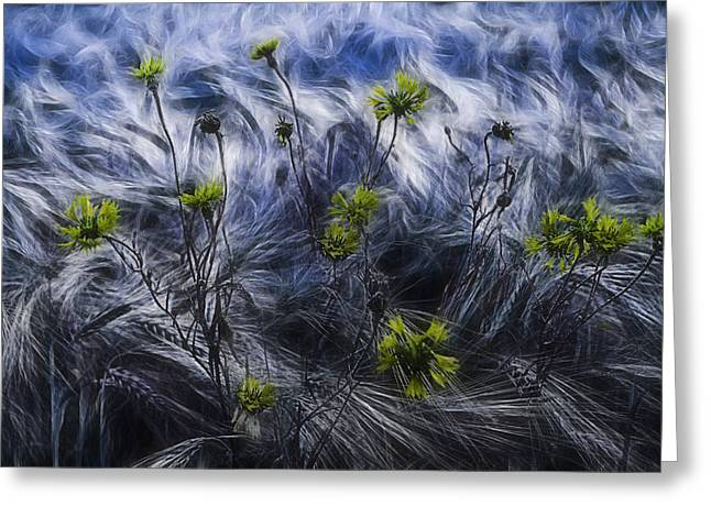 Against The Wind Greeting Card by Joachim G Pinkawa
