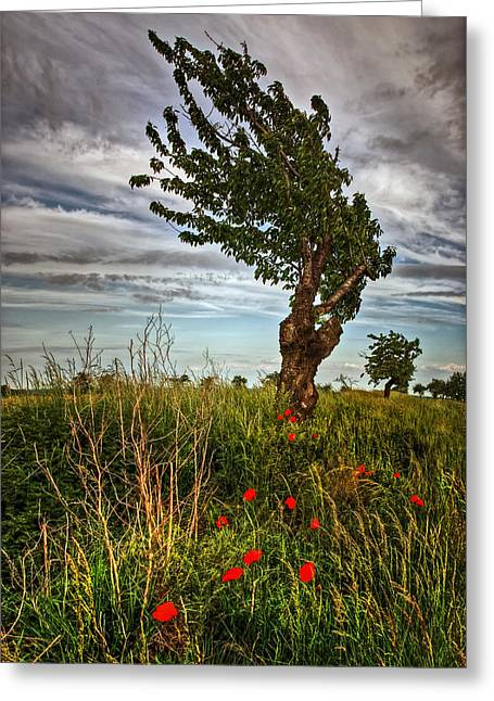 Against The Wind Greeting Card by Steffen Gierok