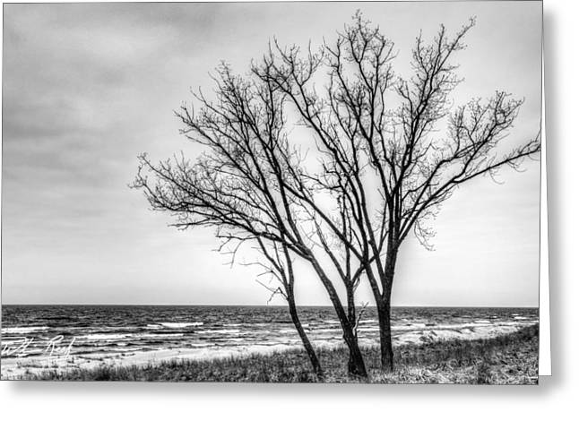 Against The Wind Greeting Card by William Reek