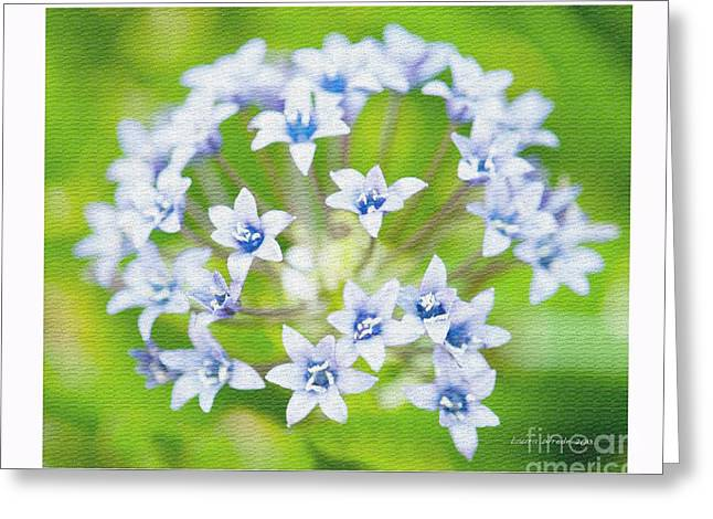 Agapantha Purple Flowers Greeting Card by Artist and Photographer Laura Wrede