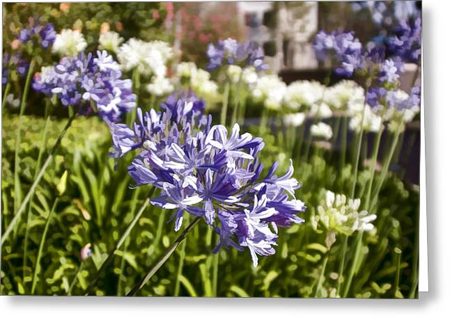Greeting Card featuring the digital art Agapanthus Lily Of The Nile by Photographic Art by Russel Ray Photos
