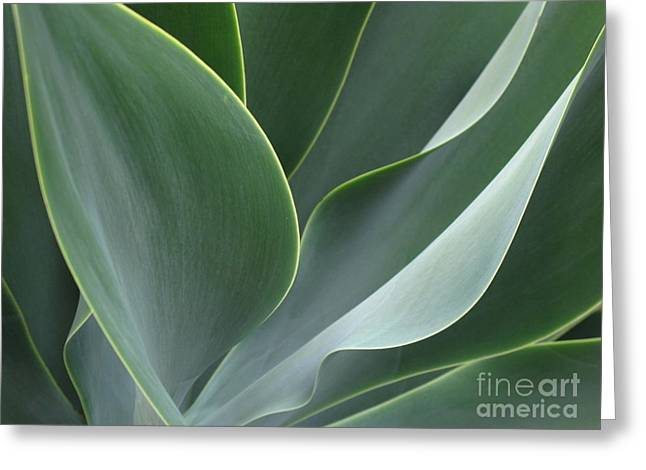 Agave 3 Greeting Card