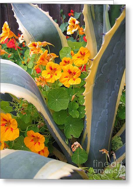 Agave And Nasturtiums Greeting Card