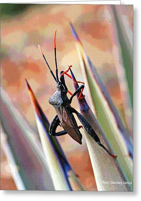 Greeting Card featuring the photograph Agave Bug  by Tom Janca
