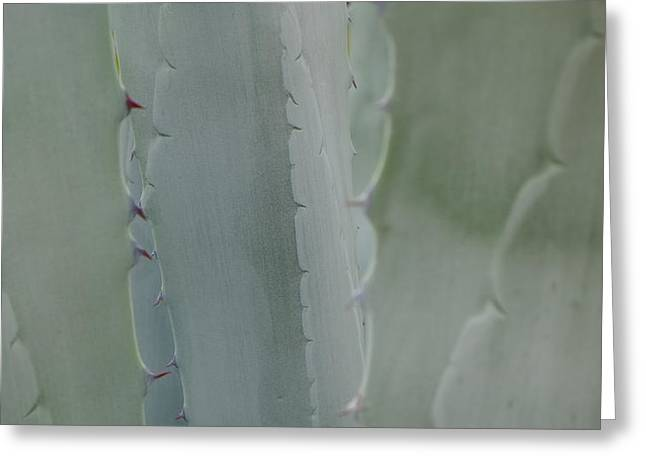 Agave Closeness Greeting Card