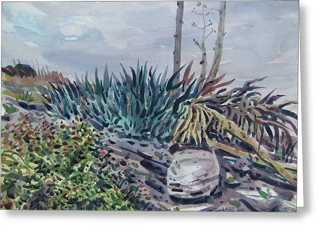 Agave Greeting Card by Donald Maier