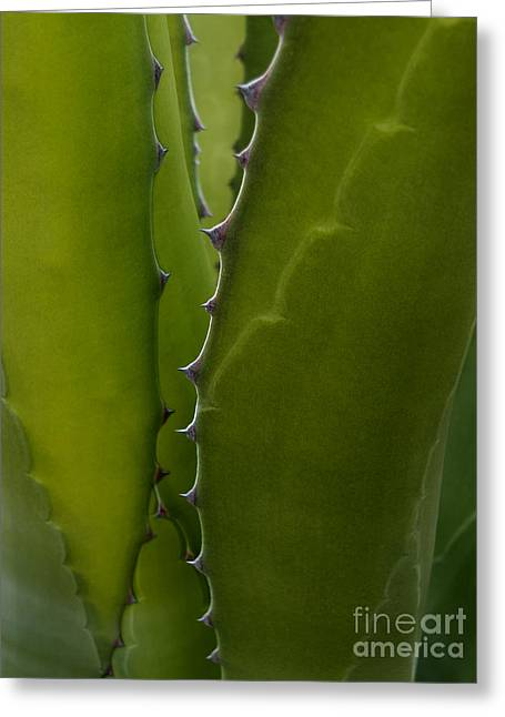 Agave One Greeting Card
