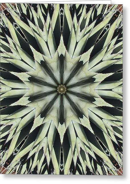 Agave Star Greeting Card