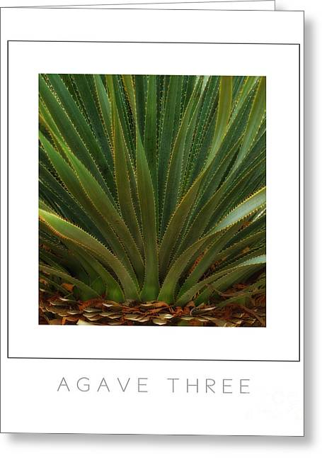 Agave Three Poster Greeting Card