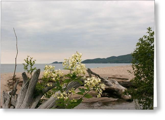 Greeting Card featuring the photograph Agawa Bay by Paula Brown