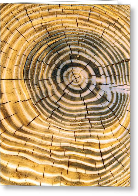 Age Rings Of Tree Trunk Greeting Card