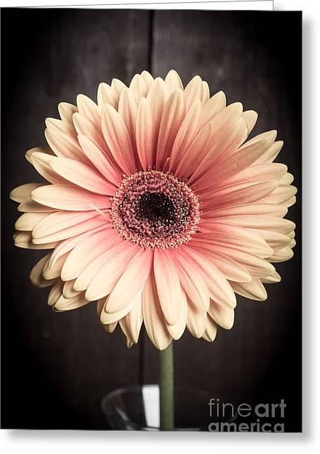 Aster Flower Greeting Card by Edward Fielding