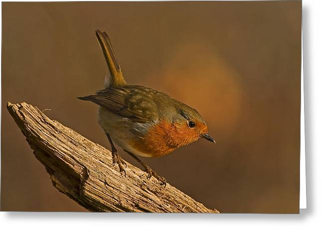 Aggresive Robin Greeting Card by Paul Scoullar
