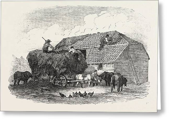 Agricultural Pictures  Thatching Greeting Card