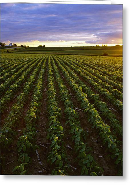 Agriculture - Early Growth Minimum Greeting Card by Scott Sinklier