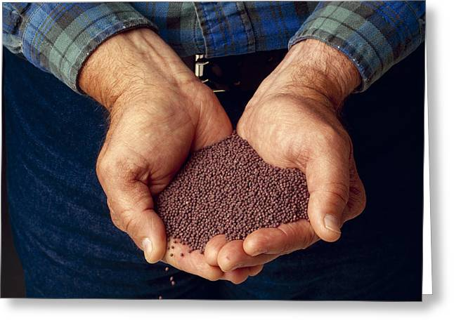 Agriculture - Farmer�s Hands Holding Greeting Card by Ed Young