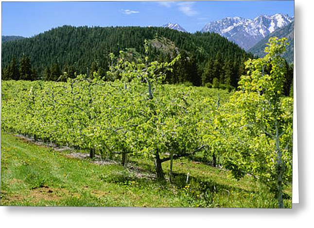 Agriculture - Pear Orchard In Late Greeting Card by Charles Blakeslee