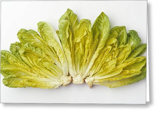 Agriculture - Romaine Lettuce Hearts Greeting Card by Ed Young