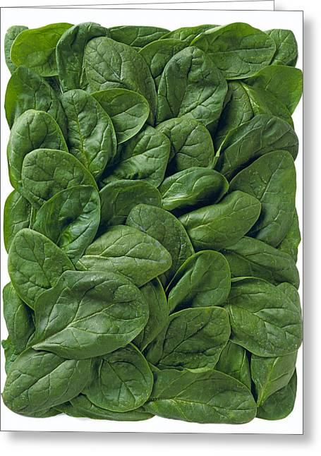 Agriculture - Spinach Leaves Arranged Greeting Card by Ed Young