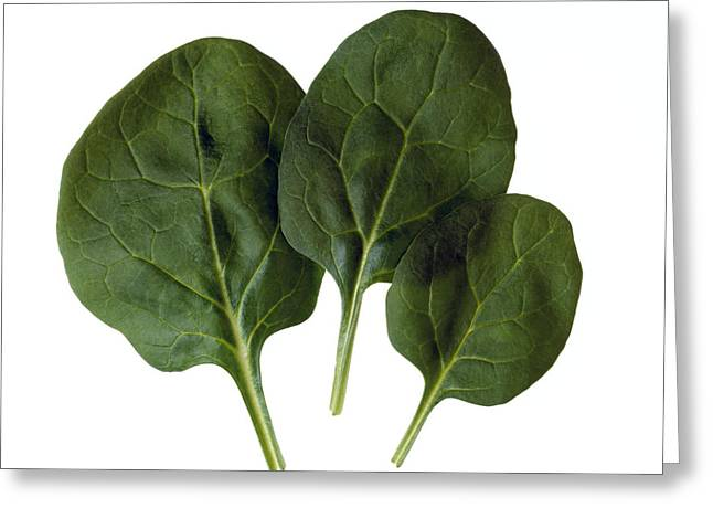 Agriculture - Spinach Leaves Closeup Greeting Card