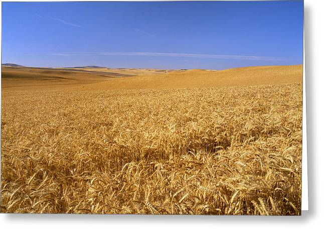 Agriculture - Wheat Field, Soft Winter Greeting Card by Gary Holscher